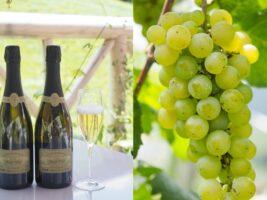 ファーストクラスで愛される、極上の日本ワイン。誕生の秘密は型破りな発想!?